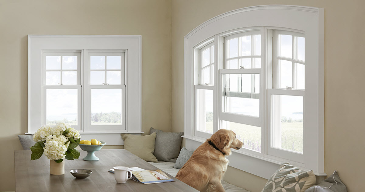 Marvin Windows Dog Infinity Wrightway Home Improvements