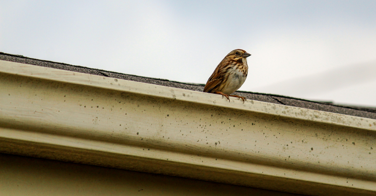8 Ways To Keep Birds Out Of Your Gutters