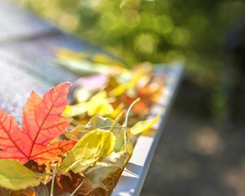 leaves_gutter